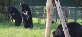 Nằm mơ thấy con gấu là số mấy, nên đánh đề con gì?