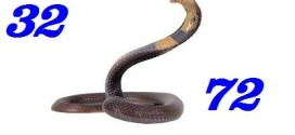 Nằm mơ thấy rắn đánh đề bao nhiêu