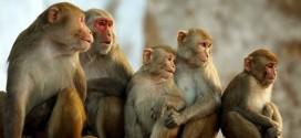 Nằm mơ thấy con khỉ – Giải mã giấc mơ thấy con khỉ