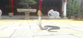 Nằm mơ thấy rắn bò vào nhà có điềm báo gì